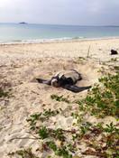 watamu-luxury-local-ocean-conservation-w