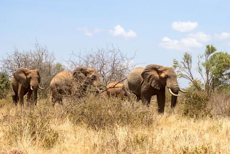 Tsavo safari