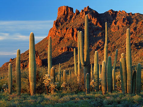 Arizona Desert Cactus HD Wallpapers.jpg