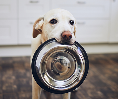dogbowl.png
