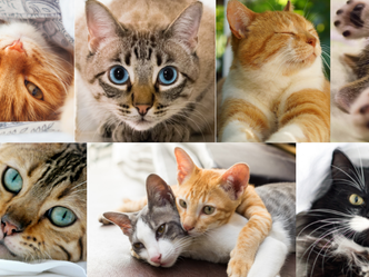 June is Adopt A Cat Month!