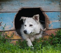 Animal Rights Awareness Week