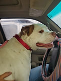 maxbulldog.jpg