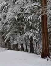 JAG Winter-crop.jpg