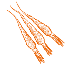 icon_carott_orange.png