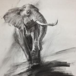 Endangered Species 3