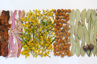 Helen Coleman dried plants.jpg