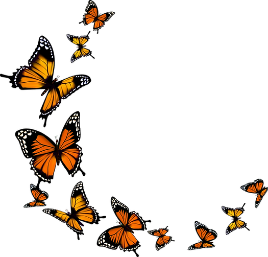 butterfly-with-transparent-background-20