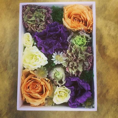 プリフレーム紫のトライアッド
