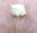 バラ小1-1.png