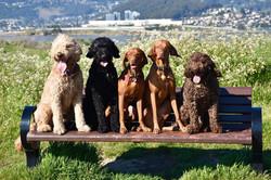 Dogs on bench.JPG.jpg