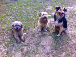 Dog fun in Bois.jpg