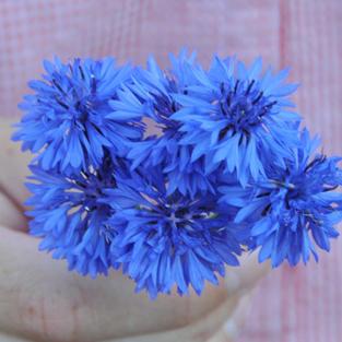 Batchelors Button Blue Boy