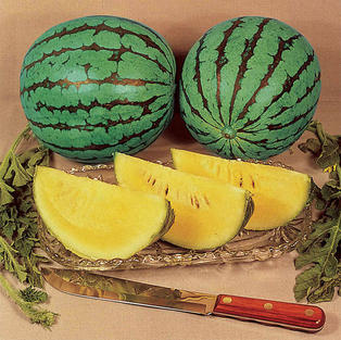 Watermelon - Yellow Baby Doll