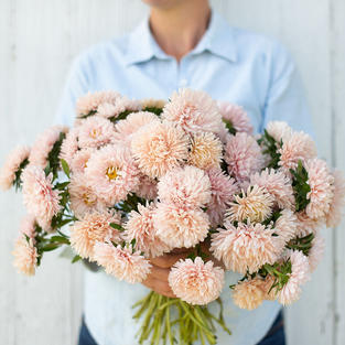 Aster King Size Apricot