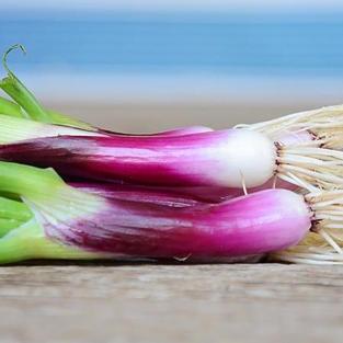 Bunching Onion, Red Baron