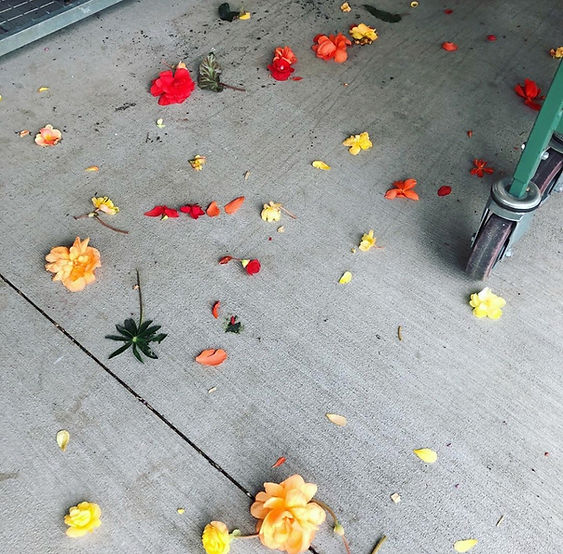 Frog Hollow Farm Fallen Flowers.jpeg