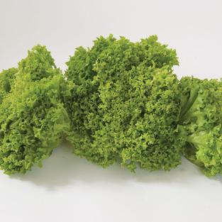 Salanova Green Incised