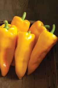 Pepper, Golden Roasting.jpg