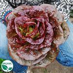 Romaine, Pomegranate Crunch