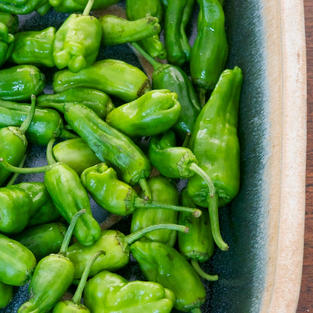 Padron-peppers.jpg