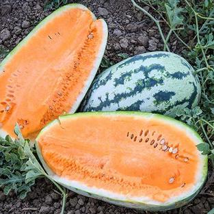 Watermelon - Orangeglo