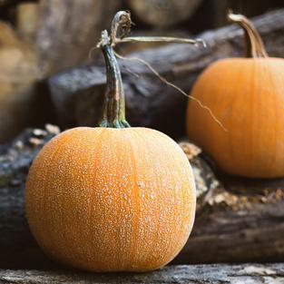 Pumpkin - Winer Luxury