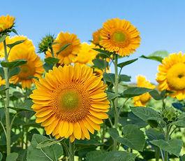 Main_Flowers
