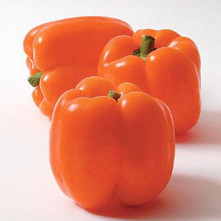 Pepper, Orange Sun.jpg