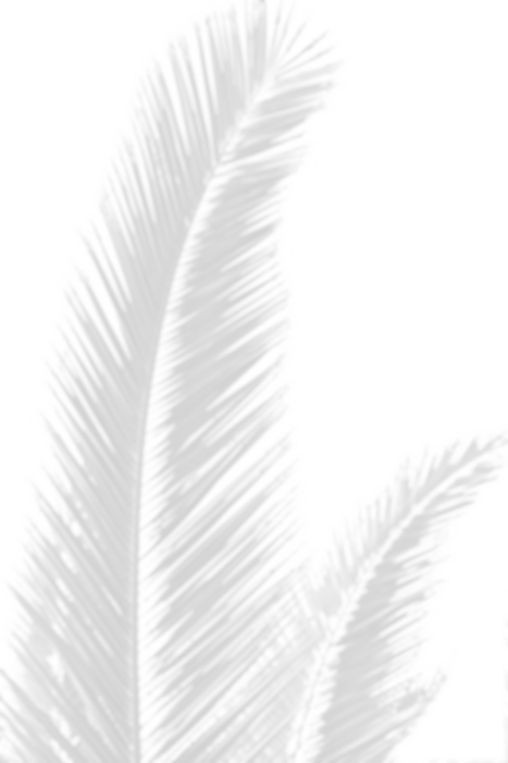 palm%20leaves_edited.png