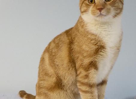 Save a Life - Adopt a Shelter Cat!