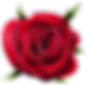 1579498-view-full-size-roses-png-5000_49