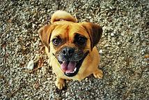 Happy healthy dog.jpg