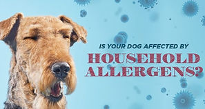 Is-you-dog-affected-by-household-allerge