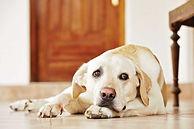 sad-dog-on-floor.jpg