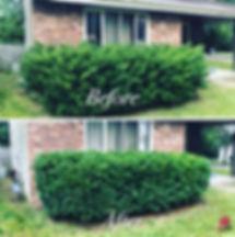 Lanscaping-Tree5.jpg