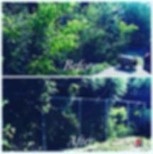 Lanscaping-Tree8.jpg