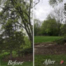 Lanscaping-Tree13.jpg