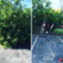 Lanscaping-Tree7.jpg
