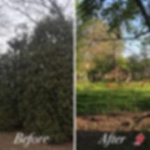 Lanscaping-Tree12.jpg