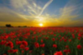 sunset-815270_960_720.jpg