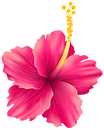 tropical-floral-background-png-3.png