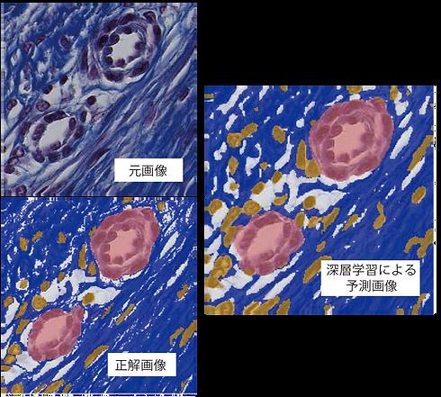 深層学習による予測画像1.png