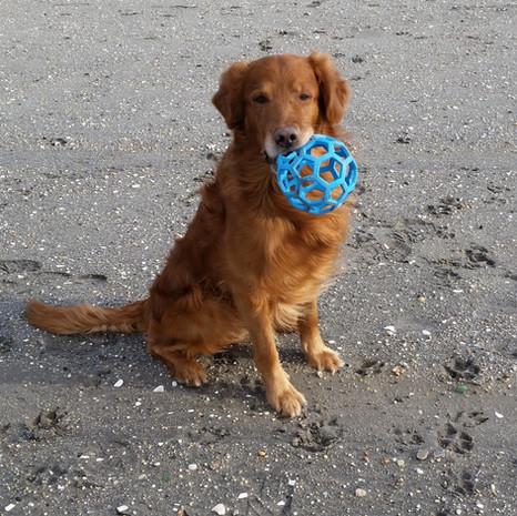 Toby on Beach