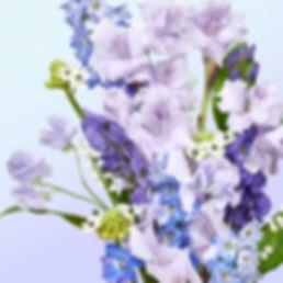 HYDRA_SOURCE_BACKGROUND_RVB.jpg