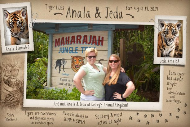 Maharajah Jungle Trek Animal Kingdom