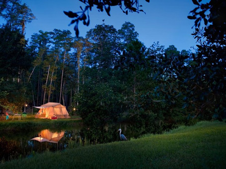 Save 20% on Ft. Wilderness Campsites!