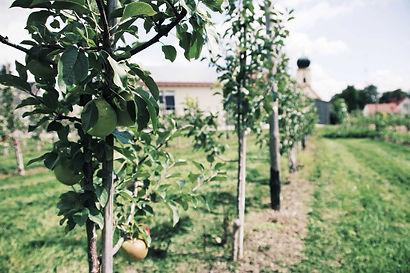 WANDLBECK Apfelbaum Hofgut Marmelade Fruchtaufstrich Sirup Senf regional Altmühltal