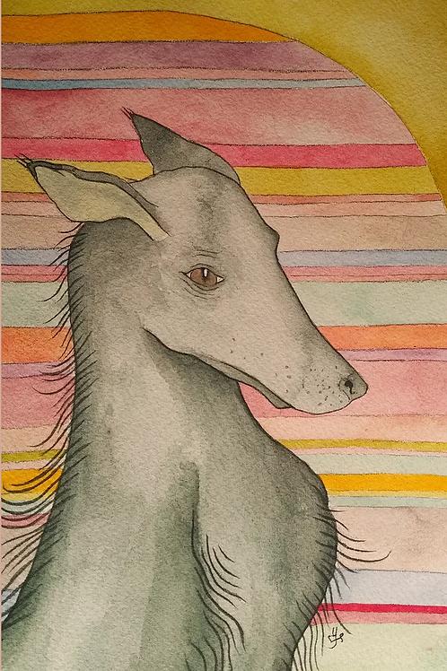 Gray Green Dog