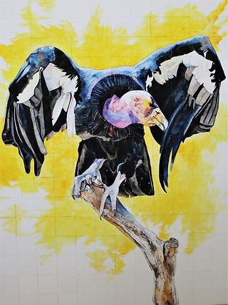 Basking Condor
